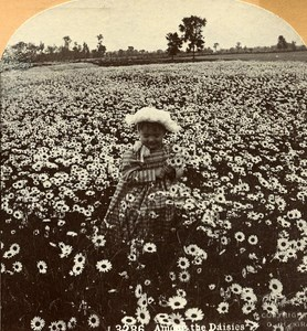 USA Among the Daisies Pretty Girl Old Stereo Photo Stereoview Graves 1900