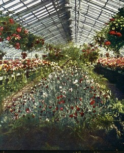 Germany Frankfurt Garden Old Autochrome on Paper from Hans Hildenbrand 1910
