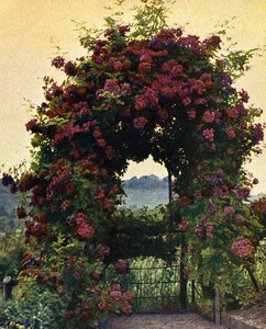 Germany Rottenberg Roses Old Autochrome on Paper from Hans Hildenbrand 1910
