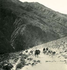 Argentina Andes Caravan of Mules Old NPG Stereo Photo Stereoview 1900