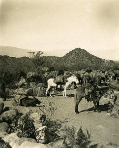Argentina Andes Copper Carrier Caravan of Mules Old NPG Stereo Photo 1900