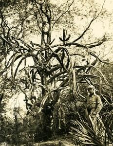 Argentina Andes Vegetation Old NPG Stereo Stereoview Photo 1900