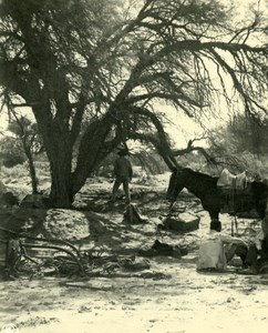 Argentina Under Honey Mesquite Tree in Bush Old NPG Stereo Photo Stereoview 1900