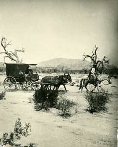 Argentina Diligence Stage-Coach in Pampa Old NPG Stereo Stereoview Photo 1900