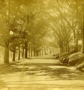 USA Boston Public Garden Beacon St Mall Old Stereoview Photo Baker 1875
