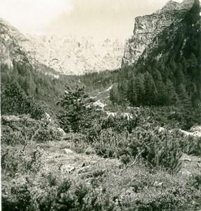 Italy South Tyrol Mountain Ampezzo Road Birkental Old Stereoview Photo NPG 1900