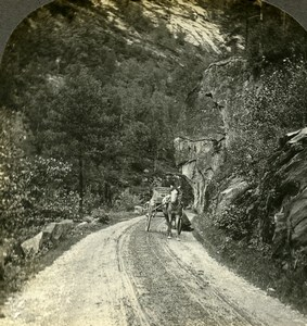 Norway road to Vossvagen Vossevangen Voss Horse Old Stereoview Photo Kelley 1900