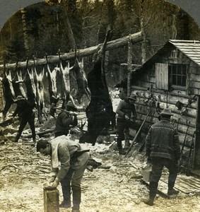 Canada or USA Hunters Camp Scene Deer Hunting Old Stereoview Photo Keystone 1903