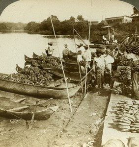 Panama Bananas Indian Market Chagres River Old Stereoview Photo Underwood 1904