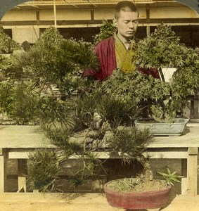 Japan Tokyo Count Okuma Bonsai Greenhouse Old Stereoview Photo Underwood 1904