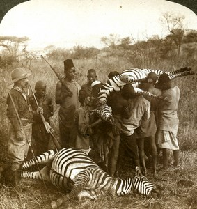 East Africa Tanzania Mount Meru Zebra Hunters Stereoview Photo Underwood 1909