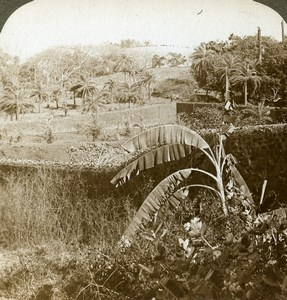 India Bombay Tower of Silence Parsi dead Old Stereoview Photo Underwood 1903