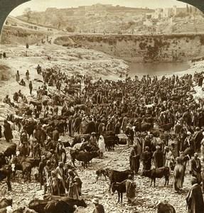 Palestine Jerusalem Pool of Gihon Cattle Market Stereoview Photo Underwood 1900