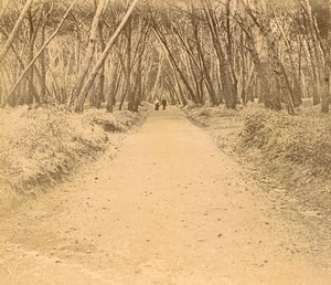France French Riviera Woodland Track Old Amateur Stereoview Photo Pourtoy 1900