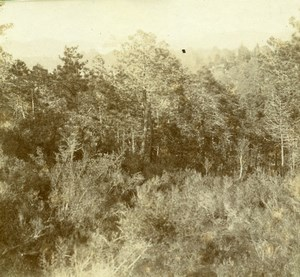 France French Riviera around Nice Forest Amateur Stereoview Photo Pourtoy 1900