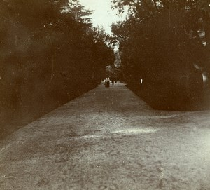 France French Riviera around Nice Trees Amateur Stereoview Photo Pourtoy 1900
