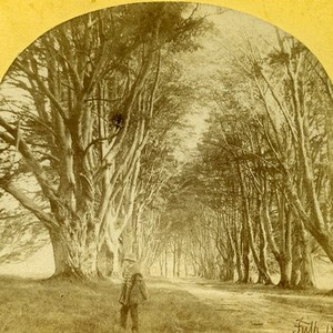 Scotland Inverary Inveraray Trees Road Old Francis Frith Stereoview Photo 1860