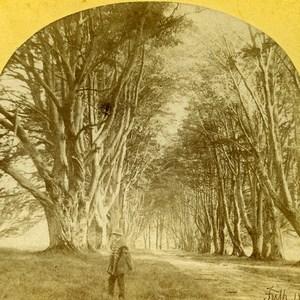 Scotland Inverary Inveraray Trees Road Old Francis Frith Stereoview Photo 1860