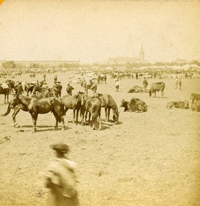 Spain Sevilla Market Fair General View Horses Cows Old Stereoview Photo 1888