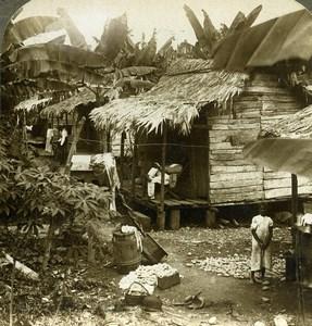 Panama Chagres River Banana Belt Old Stereoview Underwood 1904