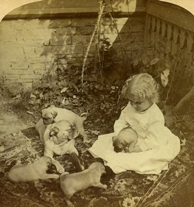 USA Little Girl playing with Puppies Old Geo Barker Stereoview Photo 1893