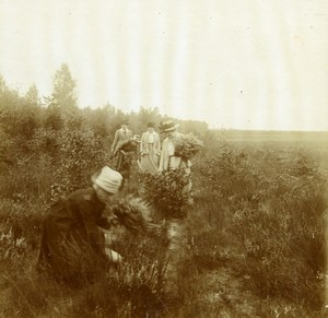 Belgique Brasschaet Bruyere Groupe de Dames ancienne Photo Stereo Amateur 1919