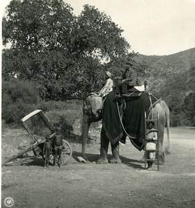 India Sikkim Sikhim Himalaya Elephant Riding Old Stereo Photo Kurt Boeck 1906