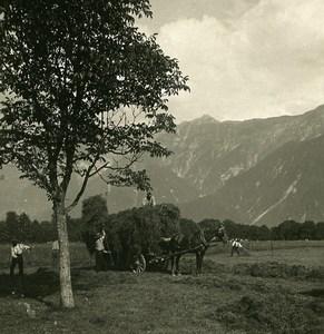 Suisse Interlaken Schynige Platte vue prise du Höheweg ancienne Stereo Photo NPG 1900