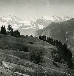 Switzerland Wengen Panorama Grazing Fields Mountain Old Stereo Photo 1900
