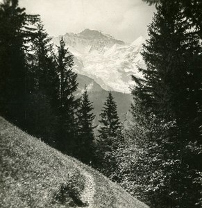 Suisse Jungfrau Panorama sentier de Wengen ancienne Stereo Photo 1900