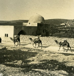 Middle East Palestine Bethlehem Rachel's Tomb Camels Old Stereo Photo NPG 1900