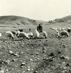 Middle East Palestine Jerusalem shepherd road to Jericho Stereo Photo NPG 1900