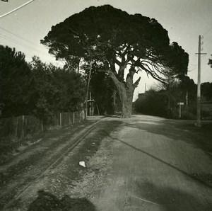 France Marseille Maritime pine Esterel Old Amateur Stereo Photo Possemiers 1900