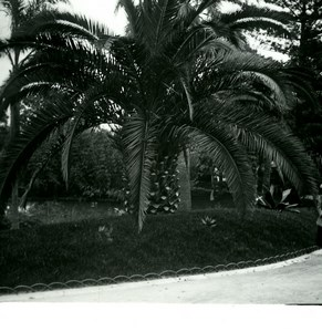Monaco Monte Carlo Casino gardens Old Amateur Stereo Photo Possemiers 1900