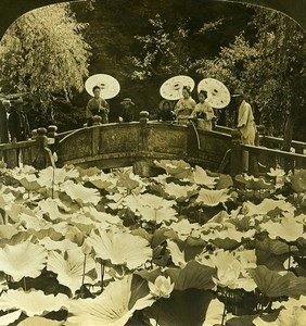 Japan Tokyo Lotus Pond in Shiba Park Old White Stereoview Photo 1900