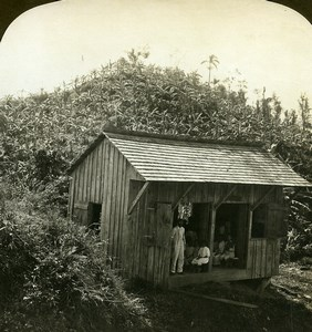 Jamaica Native country school house Banana Trees Old White Stereoview Photo 1900