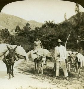 Venezuela Trincheas Pack Burros Coffee Plantation White Stereoview Photo 1900