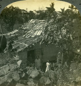 Puerto Rico cabin in jungle at Byamas Old Keystone View Stereoview Photo 1900