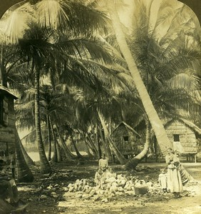 Puerto Rico a home in a Coconut Grove Old RY Young Stereoview Photo 1900