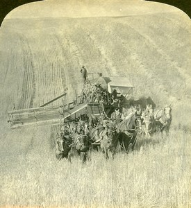 USA California Golden Grain Fields Harvest Old Young Stereoview Photo 1900