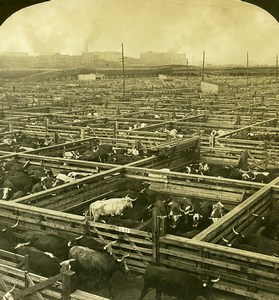 USA Chicago Great Union Stock Yards Cattle Old White Stereoview Photo 1900
