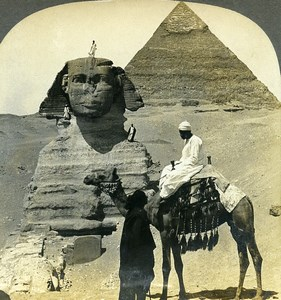 Egypt Great Sphinx of Giza Camel Old Stereoview Photo Keystone 1900