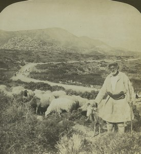 Greece Shepherd and his Flock Sheep Old Stereo Photo Stereoview HC White 1900