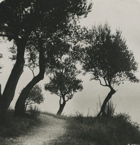 Italy Lake Garda Olive Old NPG Stereoview Photo 1900