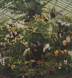 Germany Frankfurt Orchid Greenhouse Old Stereoview Chromoplast Bild 1910's