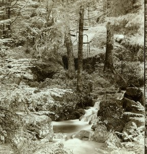 Germany near Baden Baden Forest Woodland Old Gustav Salzer Stereoview Photo 1899