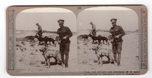 WWI Dog Search for Wounded Old Realistic Travels Stereoview Photo 1914-1918