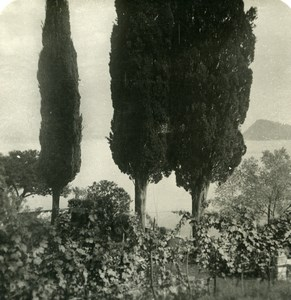 Italy Lake Como Menaggio Cypress & Vines Old Stereoview Photo 1900