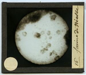 Assiette Ancienne Creil & Montereau Decouvertes du Siecle Photographie vers 1850-1900 Photographe